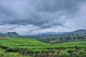 Tea Plantation Bandung