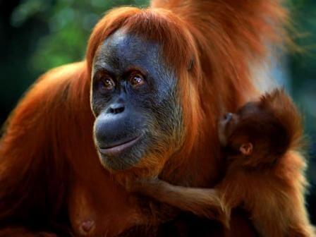 Borneo Tour
